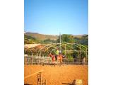 Sarıyer'de At Çiftliği