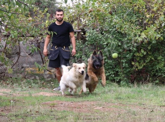 Eğitimli Köpekler