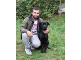 Setlere Eğitimli Köpekler